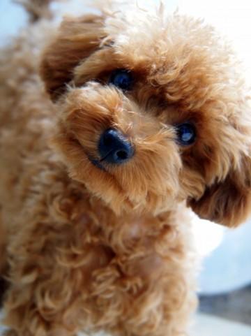 FXプードル犬 佐野さんのエントリー