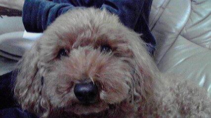 FXプードル犬 グランビルの法則の売り1、売り2、売り3